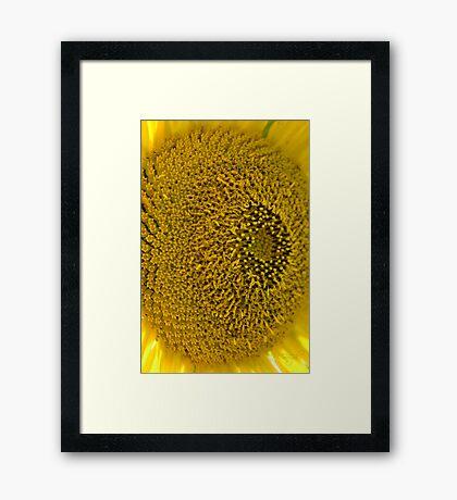 Seedless Framed Print