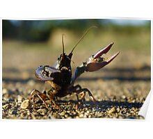 Combative Crawfish Poster