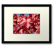 Raindrops RED Autumn Leaves Art Prints Gifts Framed Print