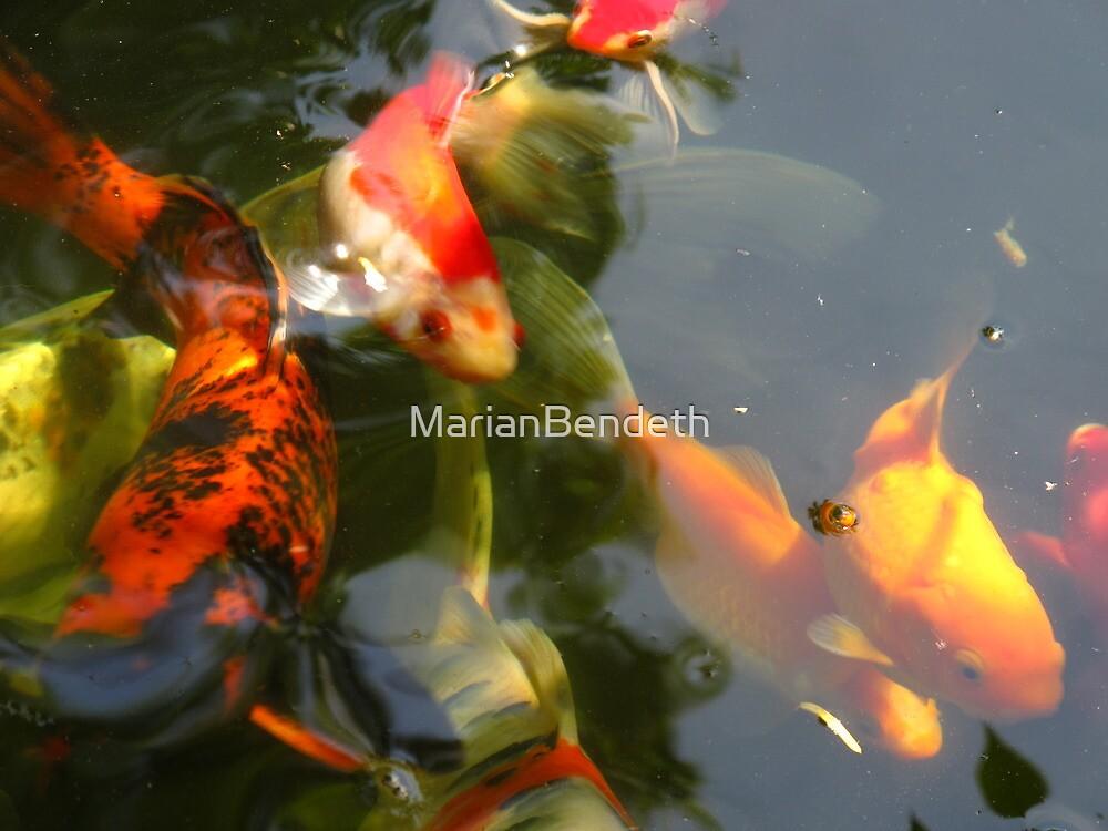 Fish flow by MarianBendeth