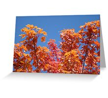 Blue Sky Sunny Red Orange Autumn Leaves art prints Greeting Card