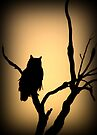 Great Horned Owl~ Sunset Stare by Kimberly Chadwick
