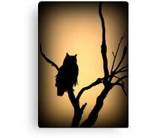 Great Horned Owl~ Sunset Stare Canvas Print