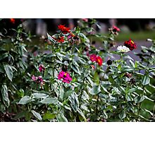 Even The Flowers Are Dead Here Photographic Print