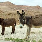 Two little Donkeys by Sue Anderson