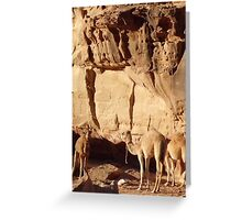 Camelflage Greeting Card