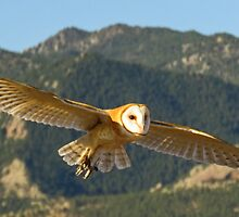 Barn Owl by Linda Sparks