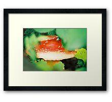 Amanita muscaria I. Framed Print