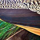 Peacock Closeup by Bami