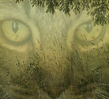 Eyes of the Forest by Annie Lemay  Photography