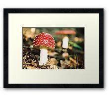Amanita muscaria IV. Framed Print