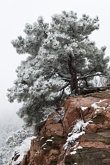 Snowy tree on red rock by Eivor Kuchta
