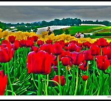 Tesselaar Tulip Festival by Sama-creations