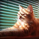 Sunning by DebbieCHayes