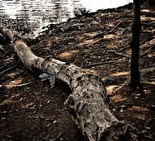 Log of Deadwood by EdwardKay