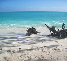 Heron Beach  by foxwellh