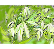 SNOWDROPS GRAPHIC ART AND PHOTO Photographic Print