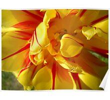 Tulip Macro # 8 Poster