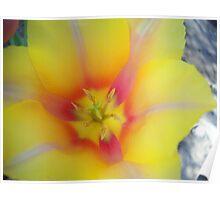 Tulip Macro # 9 Poster
