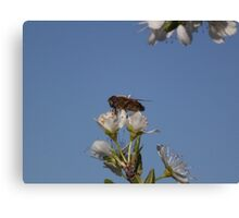 Bee on top of blossom... Canvas Print