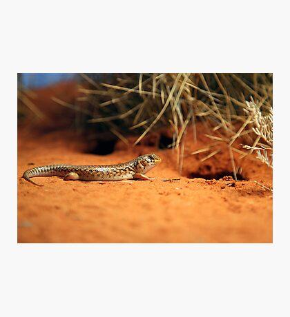 Australian Gecko Photographic Print