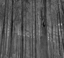 Bushland Abstract - A Study In Black & White - The HDR Experience by Philip Johnson