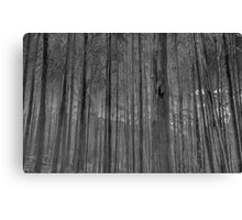 Bushland Abstract - A Study In Black & White - The HDR Experience Canvas Print