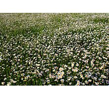 Flowers3 Photographic Print