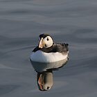 Floating Puffin by melbertmole