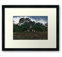 Live Oak at Dusk Framed Print