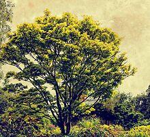 Maple Tree by Karen  Betts