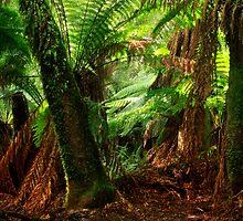 Rainforest Tasmania by Angelika  Vogel