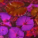 Waterlilies Leafs at the Local Pond by Nira Dabush
