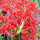 The Late Bloomer (Red Spider Lily) by WildestArt