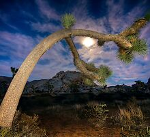 Joshua Tree Moon Landscape by Gianni Cicalese