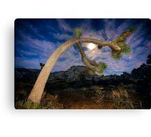 Joshua Tree Moon Landscape Canvas Print