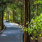 Path in Trees by MattyBoh424