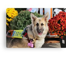 Posing in the Posies Canvas Print
