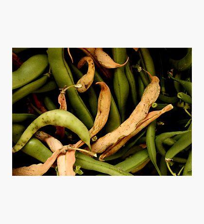 I've bean in the garden where I bean picking Photographic Print