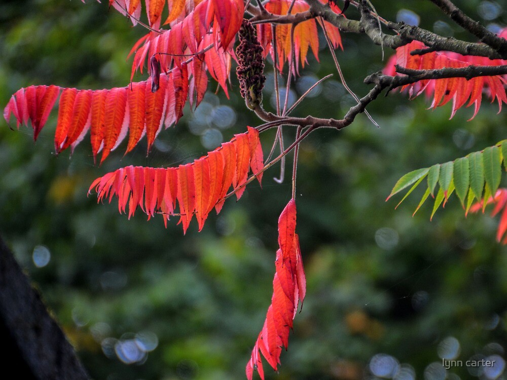 From Green To Red by lynn carter
