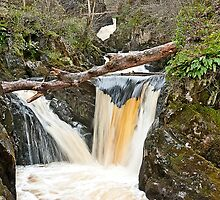 Twin Pecca Falls, Ingleton Waterfalls Trail by Sue Knowles