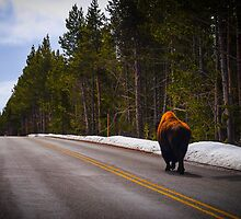 Buffalo  by Ashley Hirst