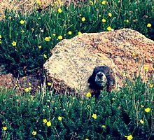 Pikes Groundhog by Skybreeze26