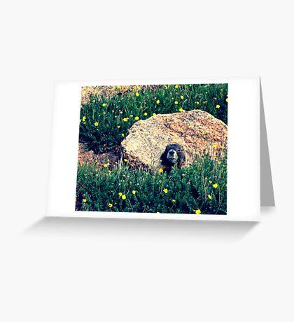 Pikes Groundhog Greeting Card