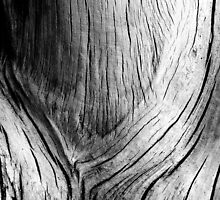 This Neck of the Wood by Duncan Cunningham