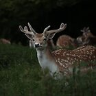 Excuse Me Deer Fallow  by Ladedadeda