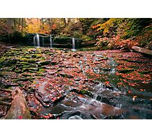 More Moss And Autumn Leaves Than Water Photographic Print