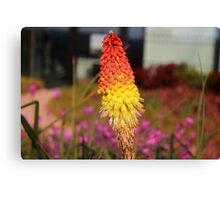 The red and yellow cluster solo flower.. Canvas Print