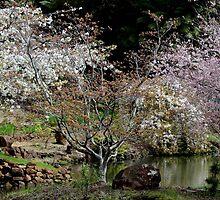 rhodo garden blossom beauty by gaylene