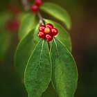 Berry Flower by Beth Mason